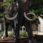 Statue d'éléphant devant l'entrée de la Galerie de paléontologie