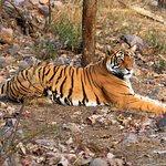 Noor resting