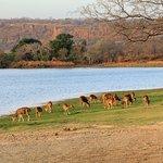 Deer on a plain