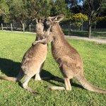 Kangaroo Walk-thru