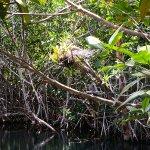 Cenotes naturaleza