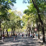 Viaje en bicicleta por paseo la reforma