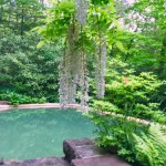 Guest house pool with wisteria