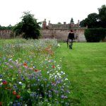 Wild meadow flowers section in the walled garden