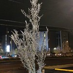 Ice covered tree next door at Starbucks (formerly Wendys)