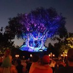 The Tree of Life Show at Animal KIngdom Just before the Park Closes.