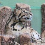 Foto di Prague Zoo