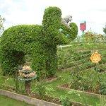 A topiary bear (I think)