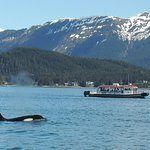 Great shot of an Orca blowing and a view of another boat from Gastineau Guiding