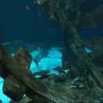 Photo de Mandalay Bay Aquarium