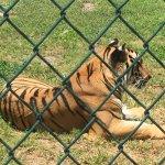 Foto de Big Cat Habitat and Gulf Coast Sanctuary