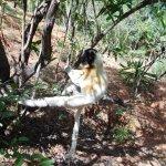 Photo of Lemurs' Park