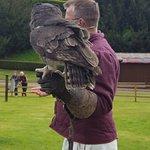 Bird of prey show.