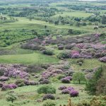 Pink and purple spotted landscape