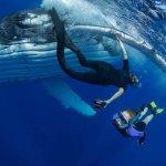 Vavau hugging whale