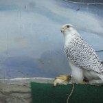 World Center For Birds of Prey Foto
