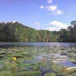 The local water lily is among our favorite sights on the Waccamaw River!