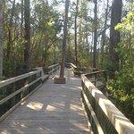 Trail on Turkey Creek