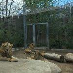 Photo of Denver Zoo