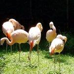 Flamingos just 20 feet away