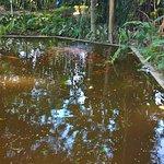 Jardín Botánico Plan del la Laguna