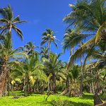 Palm trees in Tayrona