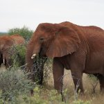 Okambara Elephant Lodge Resmi