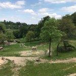 Opel Zoo