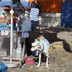 This dog was selling the jersey of Argentina!