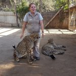 Our Guide with the Cheetah encounter