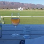 Quaffable wine and Polo fields - a match made in heaven.