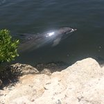 Dolphin Research Center Foto