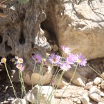 There are some special flowers at Red Rock