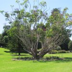 Photo of Royal Botanic Gardens