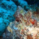 Foto de Emerald Green Diving Center - Day Tours