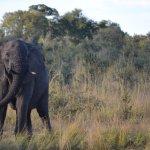 Elephant's Eye, Hwange Foto
