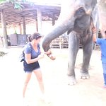 A day with the elephants.