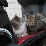 小貓咪瑞鴻