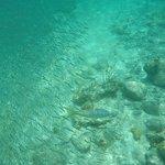 Snorkeling at Trunk Bay