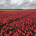 So many beautiful fields of flowers in the area!
