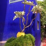 Bright colors in Jardin Marjorelle