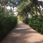 One of the paths through the resort
