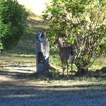 Deer next to cabin