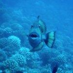 Foto di TOPDIVE Tahiti