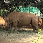 Double horn rhino