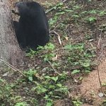 Bear we saw from the car
