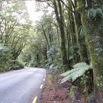 The forests in New Zealand are magical. Watch out for Hobbits!
