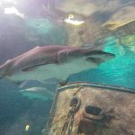 Photo de Ripley's Aquarium of the Smokies