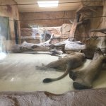 Photo of Zoo Dresden