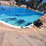 Programme découverte plongee en piscine et sorties en bateau dans le parc marin